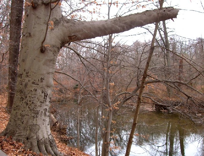 Pennypack -- Calm before the storm-penny02.jpg