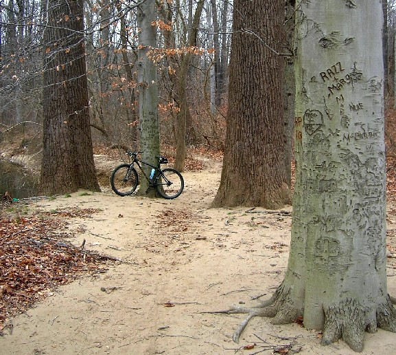 Pennypack -- Calm before the storm-penny07.jpg
