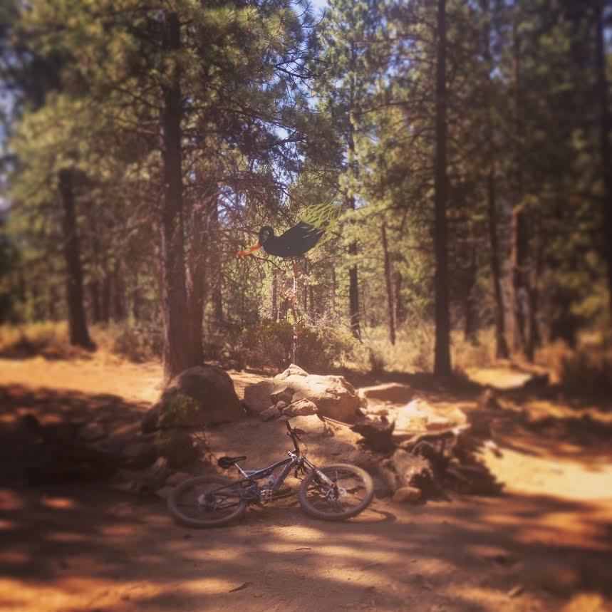 Bike + trail marker pics-phoenix.jpg