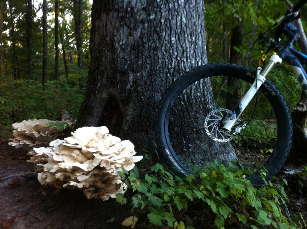 Mushrooms....Post your pics...-photo-1.jpg