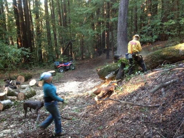 Demo Forest Trailwork Schedule-photo-1-.jpg
