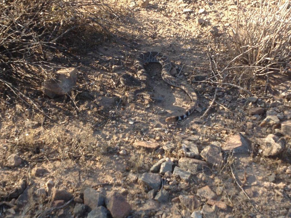 Cool Mornings, Good For Snakes-photo-15-.jpg