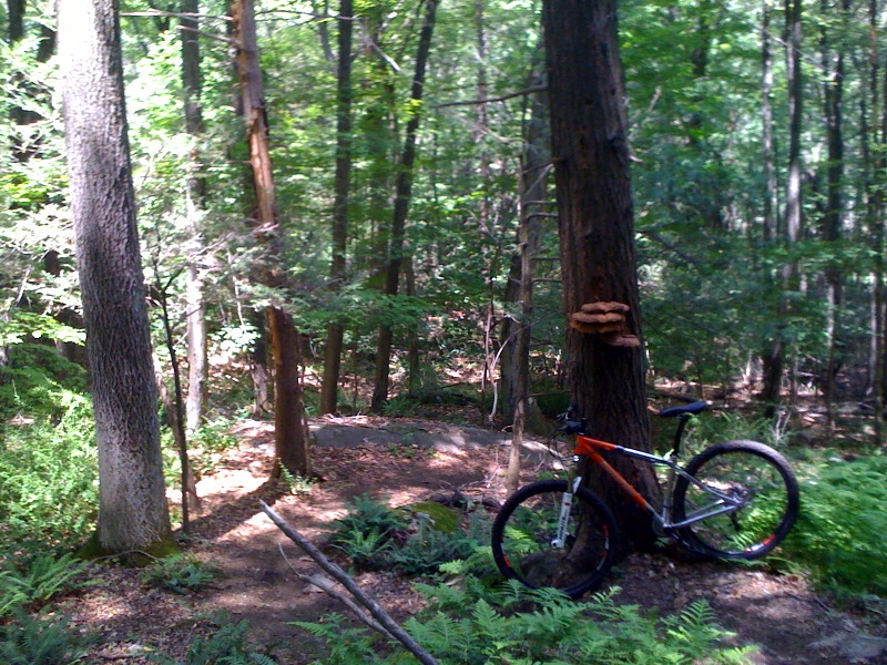 Hardtail XC photo thread-photo-2.jpg