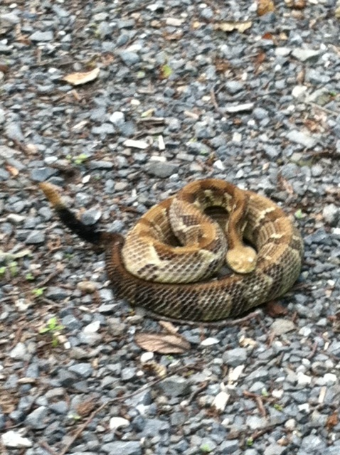 Wildlife you have seen on trail...post your pics...-photo-2-.jpg