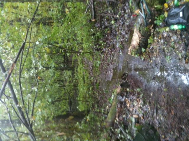 Moon Lake Trail damage reports here-photo-245.jpg