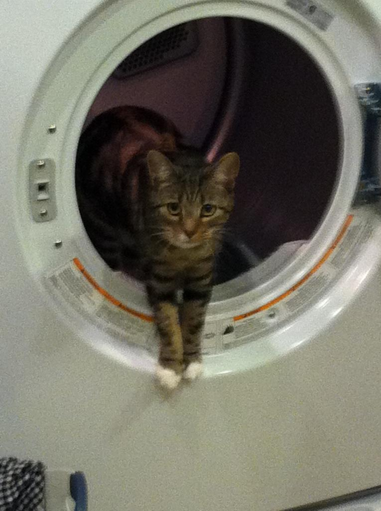 Cat Passion (here kittie, kittie, my new best friend...) Post your cat photos.-photo-28-.jpg