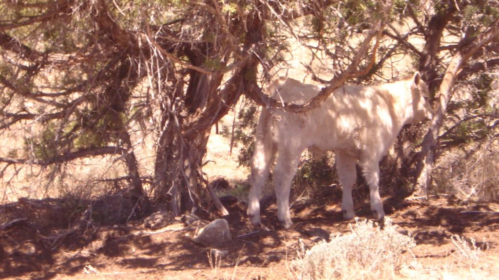 Grand Junction/Moab Trip  April 21st-28th 2012-photo-4-3-.jpg
