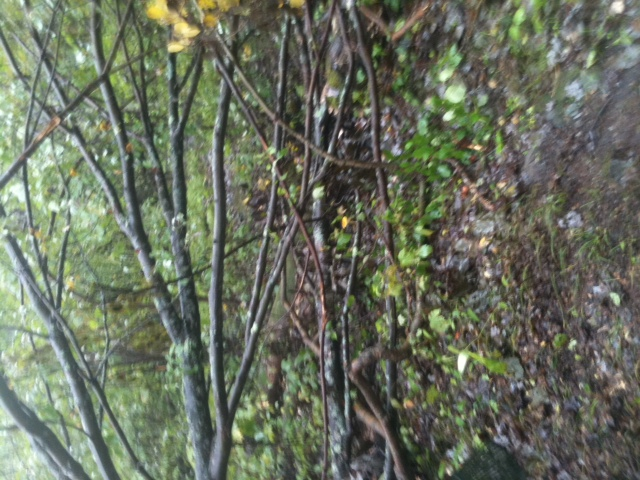 Moon Lake Trail damage reports here-photo-4.jpg