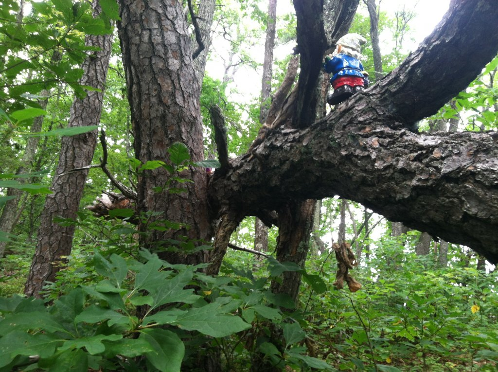 Adventures with the Pisgah Gnome-photo-9.jpg