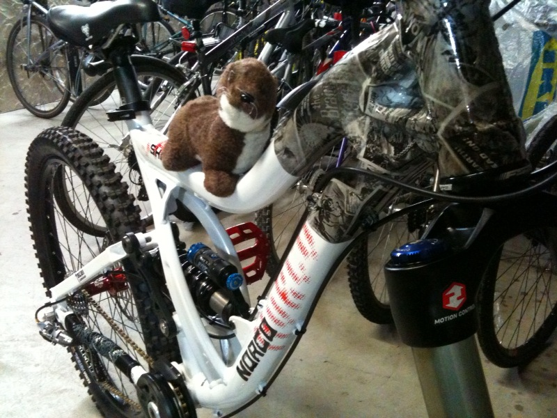 Who Rides A Norco?-photo.jpg
