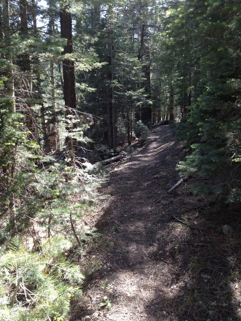 Vicarious Transformations - a view from the Cabin Loop-photo.jpg