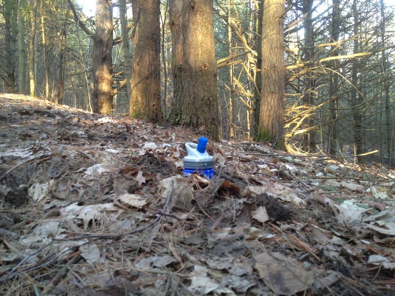 Durham Forest Conditions-photo-l.jpg