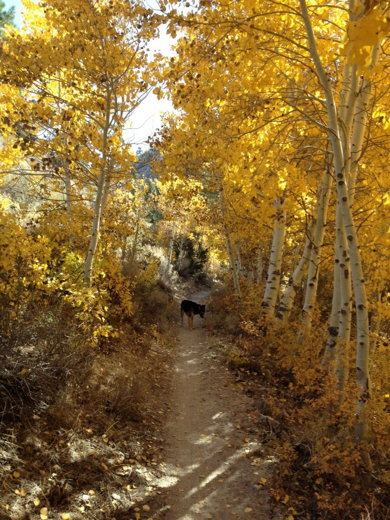 Post Pics of your Fall Foliage!!-photo1.jpg