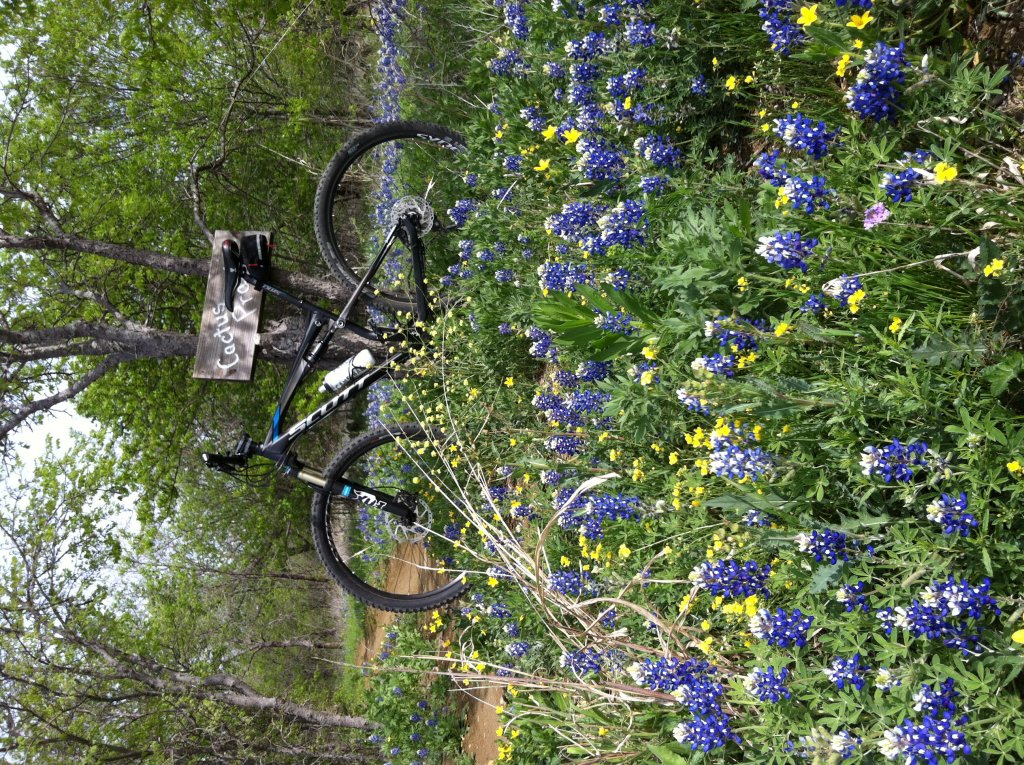 Bluebonnet trails-photo1.jpg