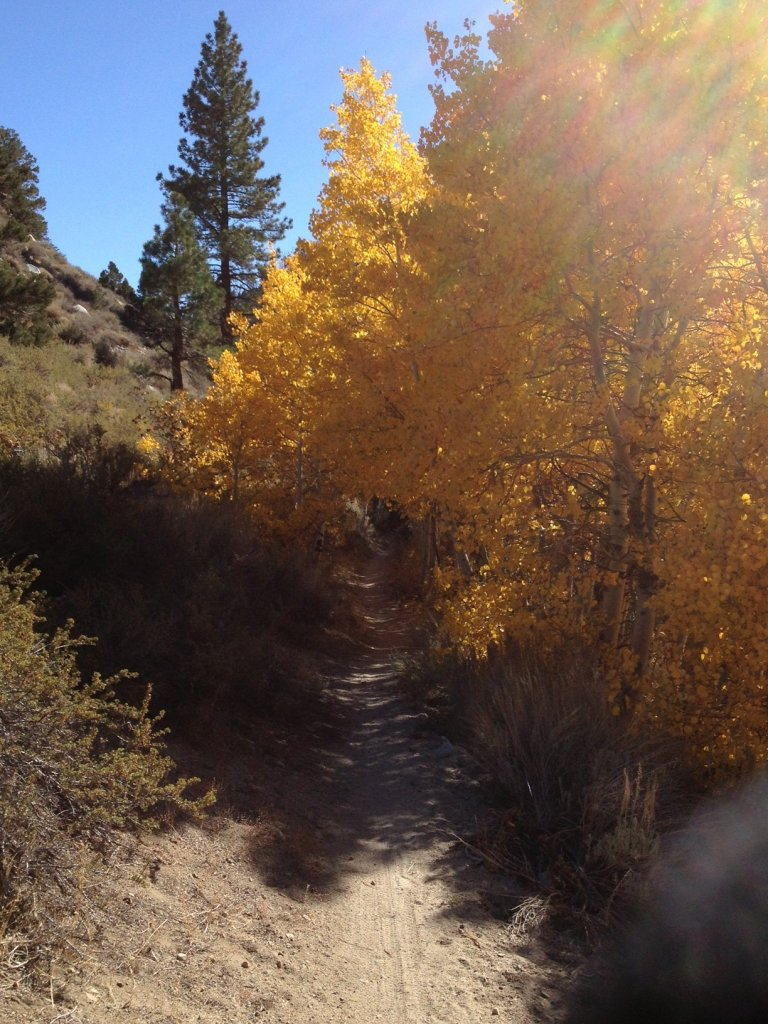 Post Pics of your Fall Foliage!!-photo2.jpg