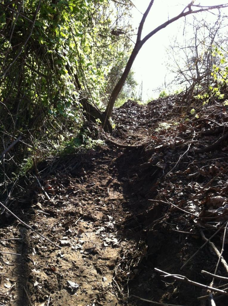 My Backyard Trail & Dealing with Soft Soil-photo3.jpg