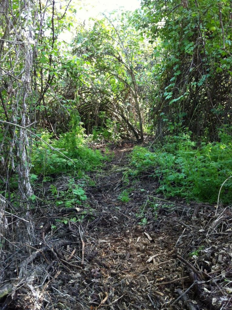 My Backyard Trail & Dealing with Soft Soil-photo4.jpg