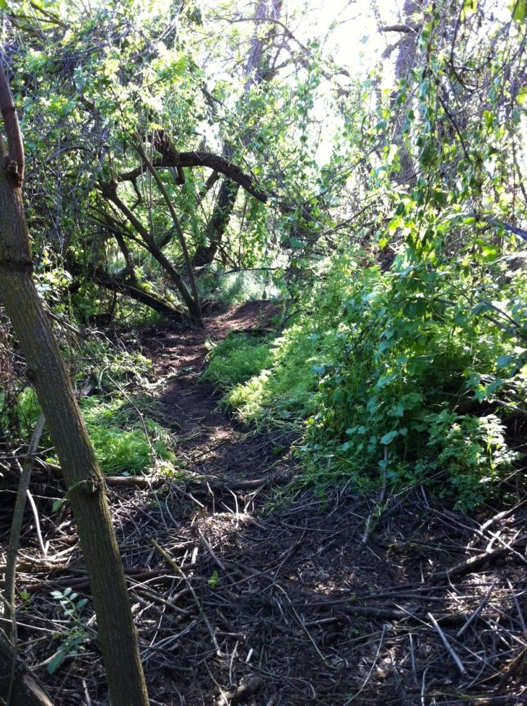 My Backyard Trail & Dealing with Soft Soil-photo5.jpg