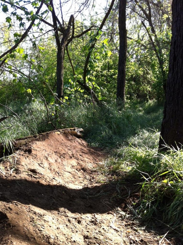 My Backyard Trail & Dealing with Soft Soil-photo7.jpg