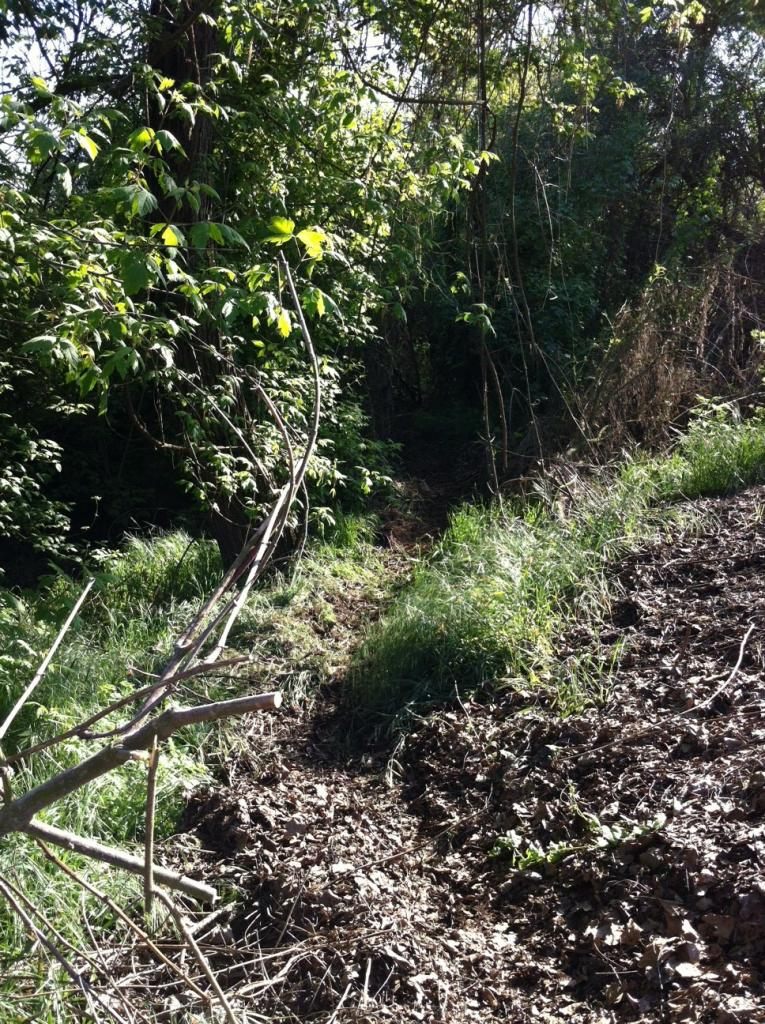 My Backyard Trail & Dealing with Soft Soil-photo9.jpg