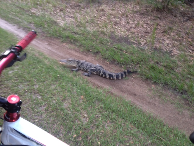Hucking Gator-photo_1-17-.jpg