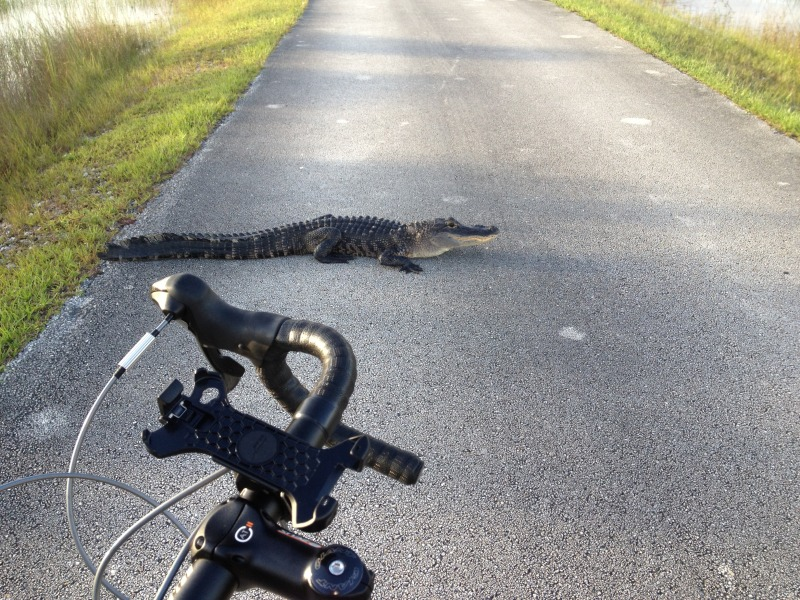 Wildlife you have seen on trail...post your pics...-photo_zps1b7a54fd.jpg