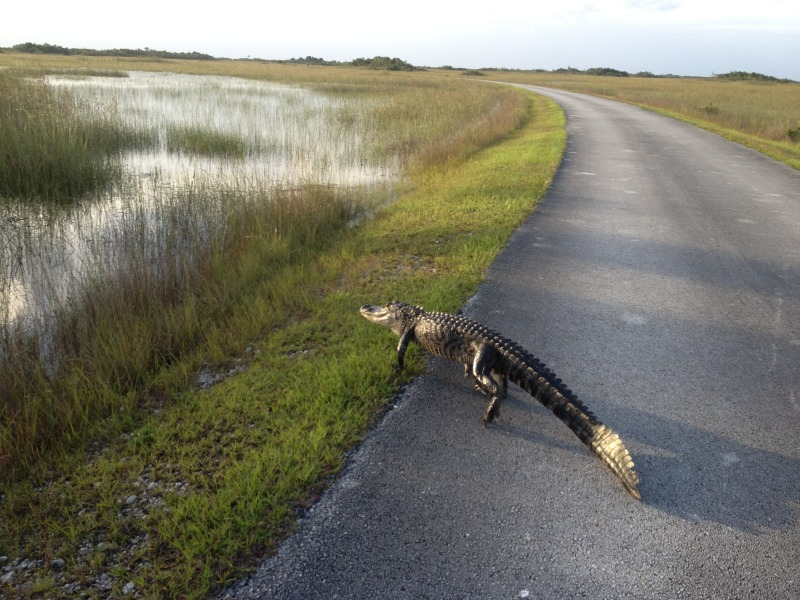 Wildlife you have seen on trail...post your pics...-photo_zps221d8519.jpg