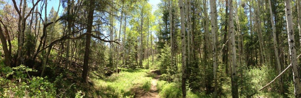 The NM Trail Pix Thread-photoaa.jpg