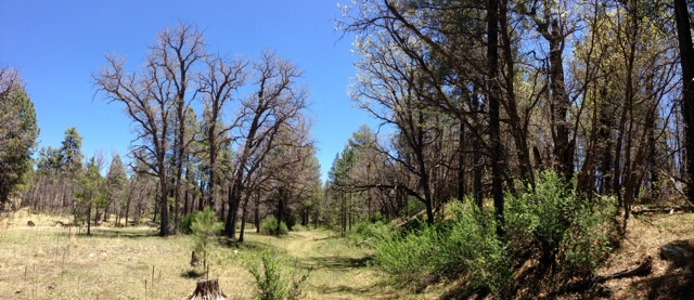 The NM Trail Pix Thread-photot.jpeg