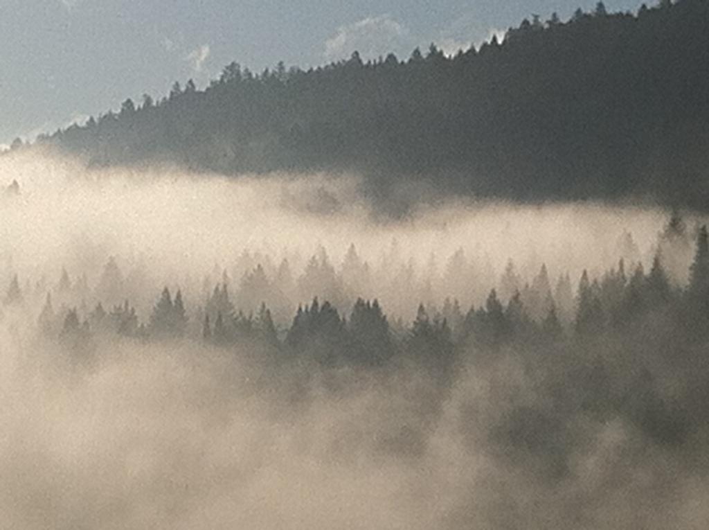 Demo Forest Trailwork Schedule-pic2d.jpg