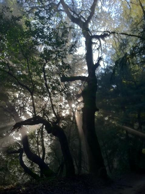 Demo Forest Trailwork Schedule-pic3d.jpg