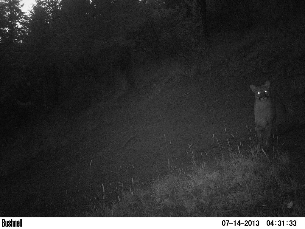 3 weekends in a row, 3  black bear encounters-pict1127.jpg