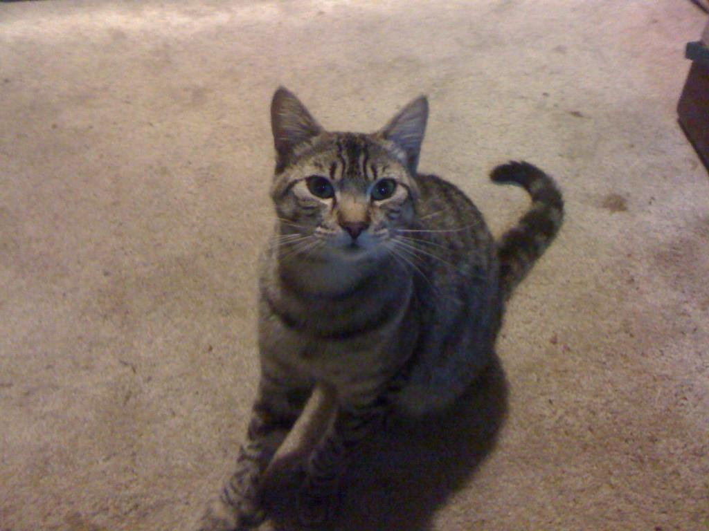 Cat Passion (here kittie, kittie, my new best friend...) Post your cat photos.-picture-011.jpg