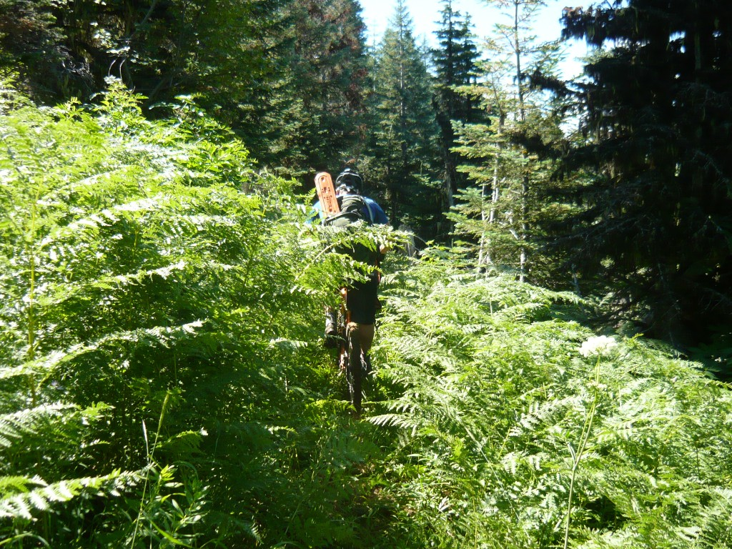 O'Leary Mtn trail is clear and it rips!-picture-013.jpg