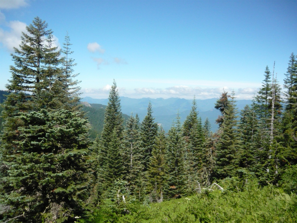 O'Leary Mtn trail is clear and it rips!-picture-020.jpg