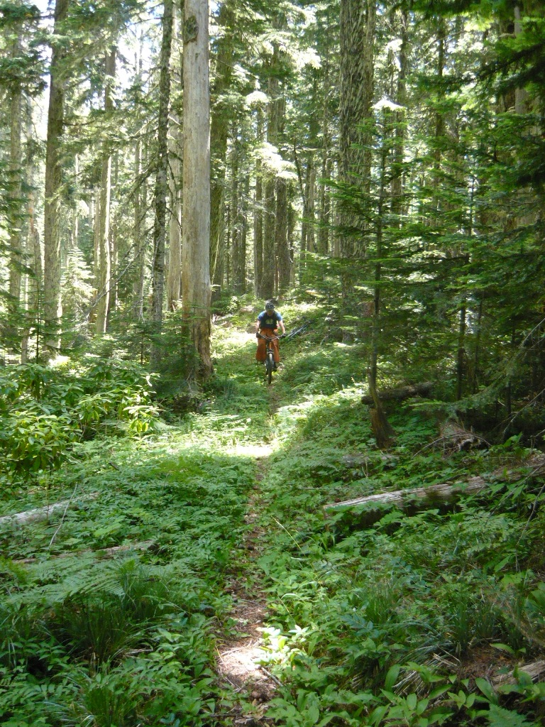 O'Leary Mtn trail is clear and it rips!-picture-055.jpg