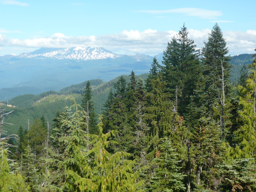 O'Leary Mtn trail is clear and it rips!-picture-069.jpg