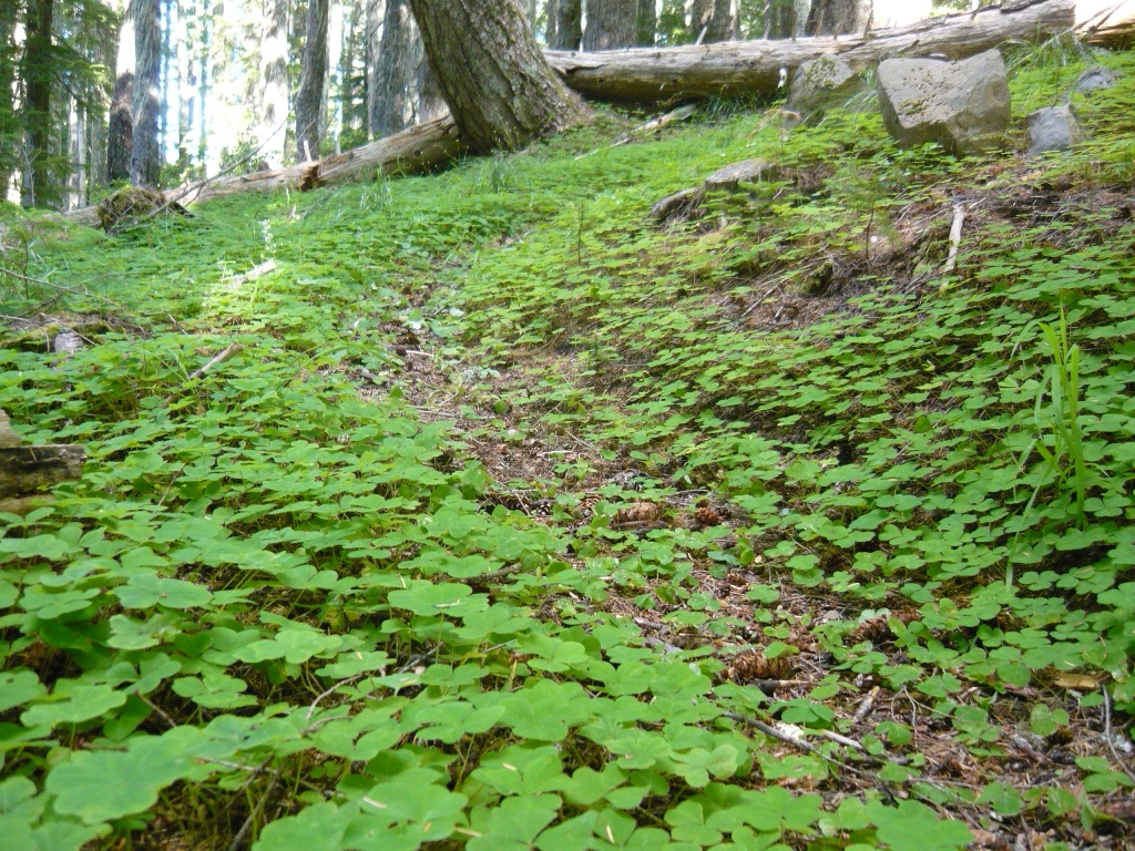 O'Leary Mtn trail is clear and it rips!-picture-085.jpg