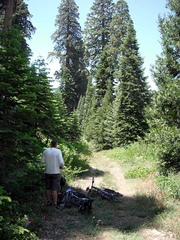 Horse crap in the trail-picture-1147s.jpg
