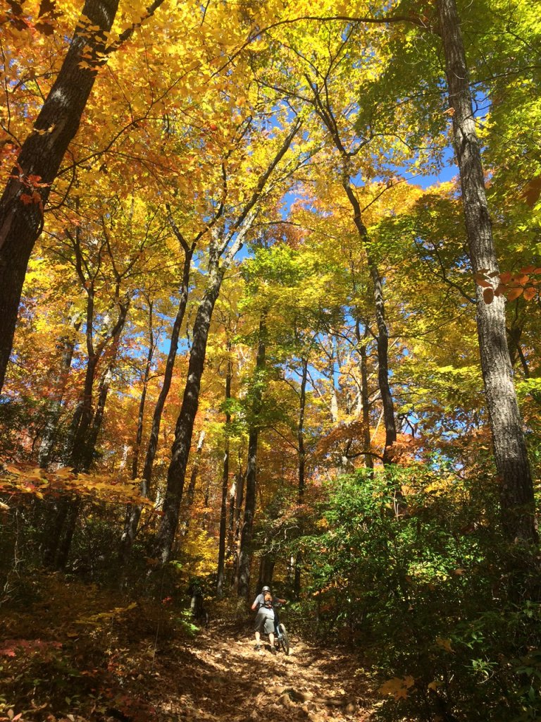 Several DuPont Trails Are Closed...-pisgah-10-26-14.jpg