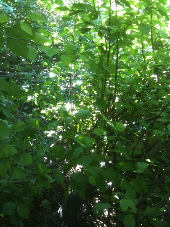 Corral to Kingsbury via Stateline?-plants.jpg