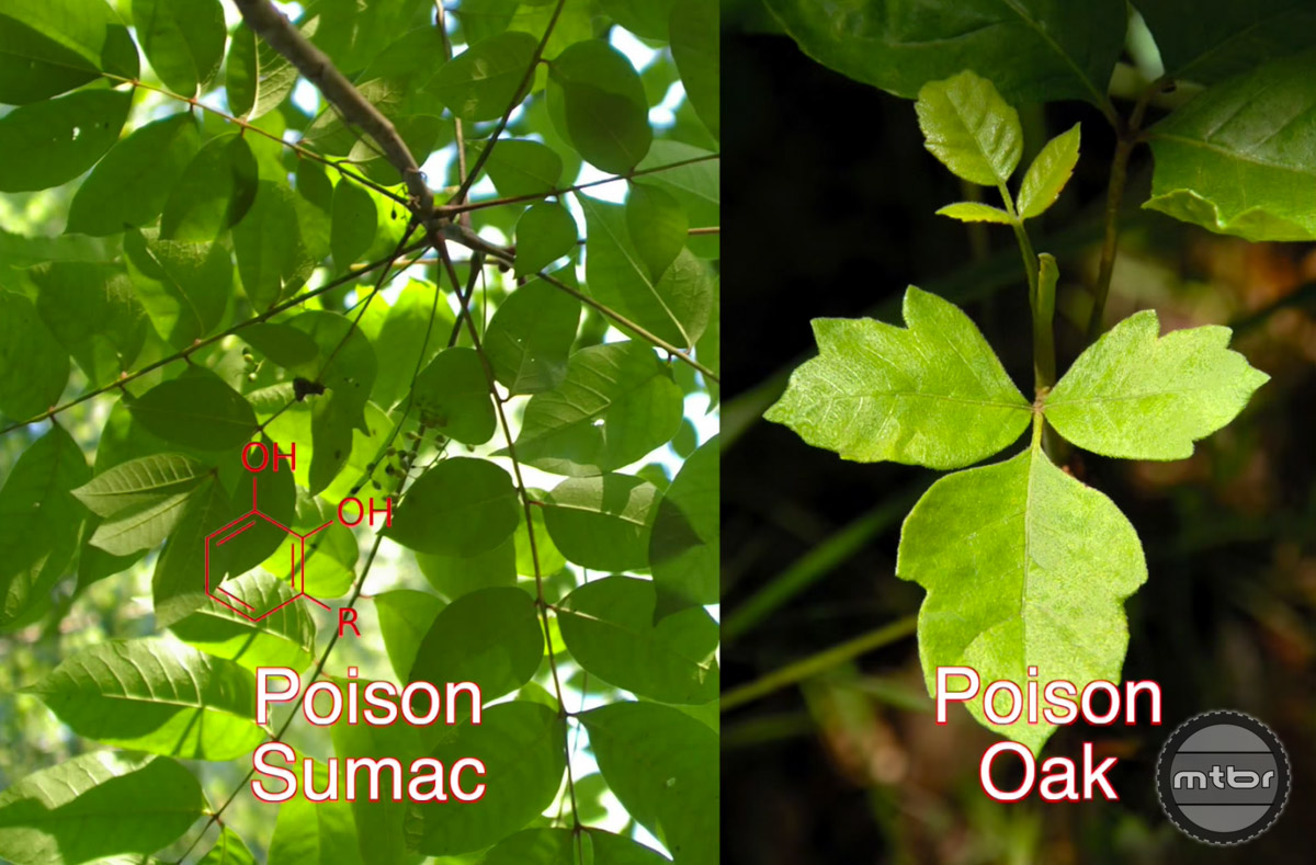 Urushiol oil in poison sumac, poison oak, and poison ivy.