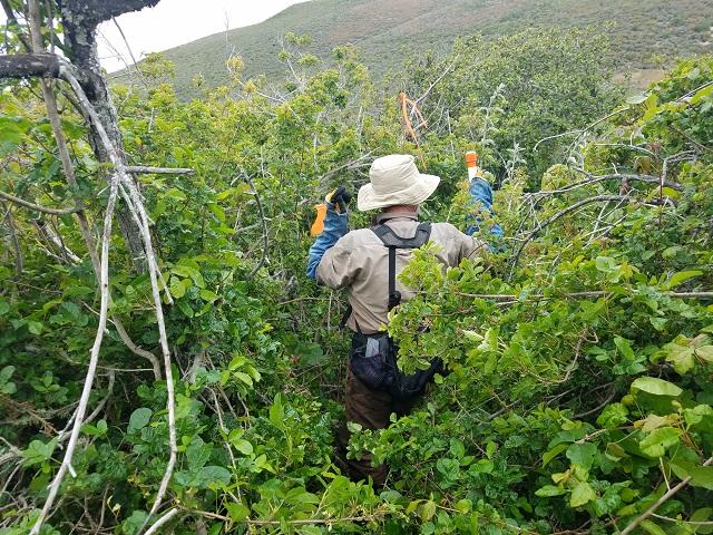 Poison oak is out in force-poisonoak1.jpg