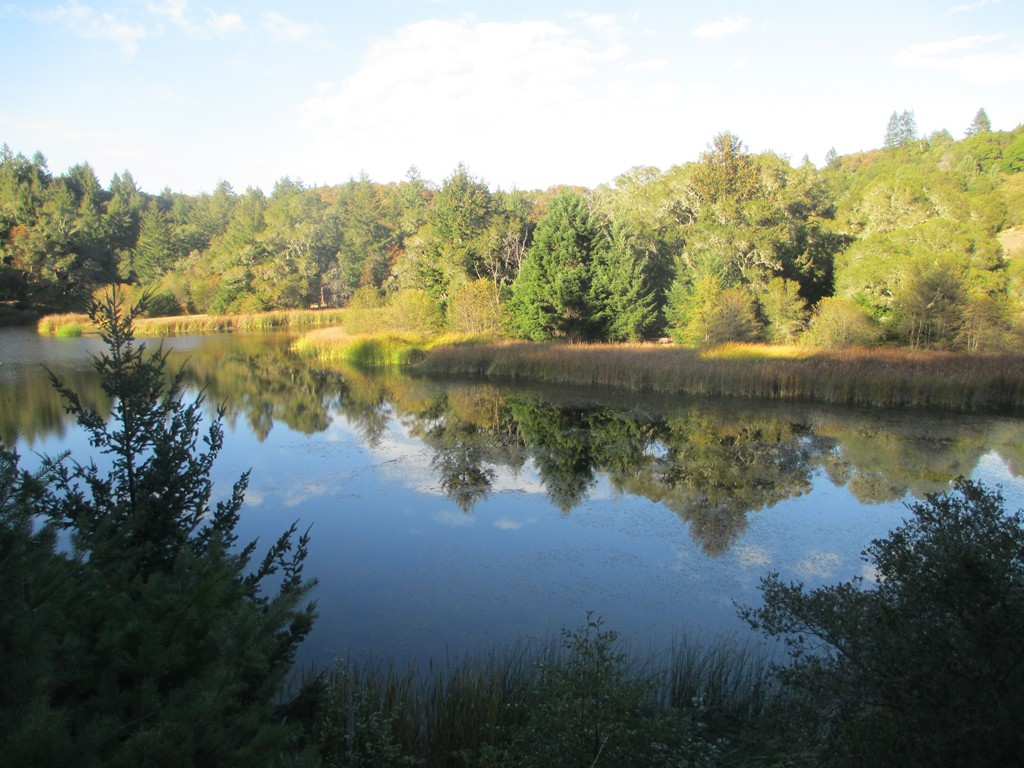 Post Pics of your Fall Foliage!!-postcard.jpg