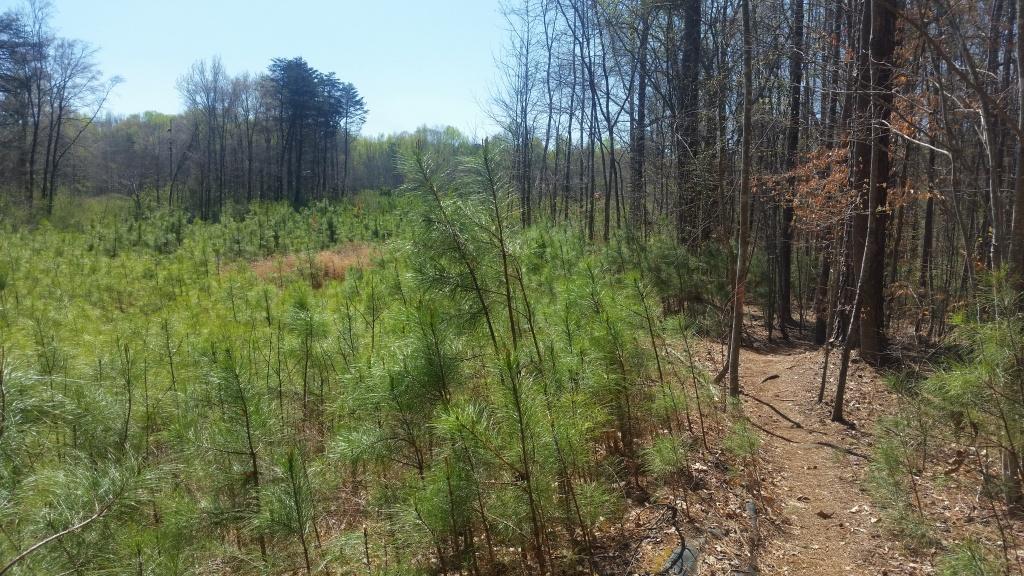 Charlotte area trails-poston1.jpg