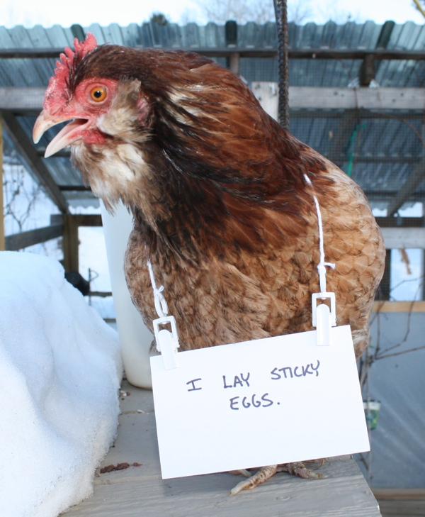 -poultry-shaming-01.jpg