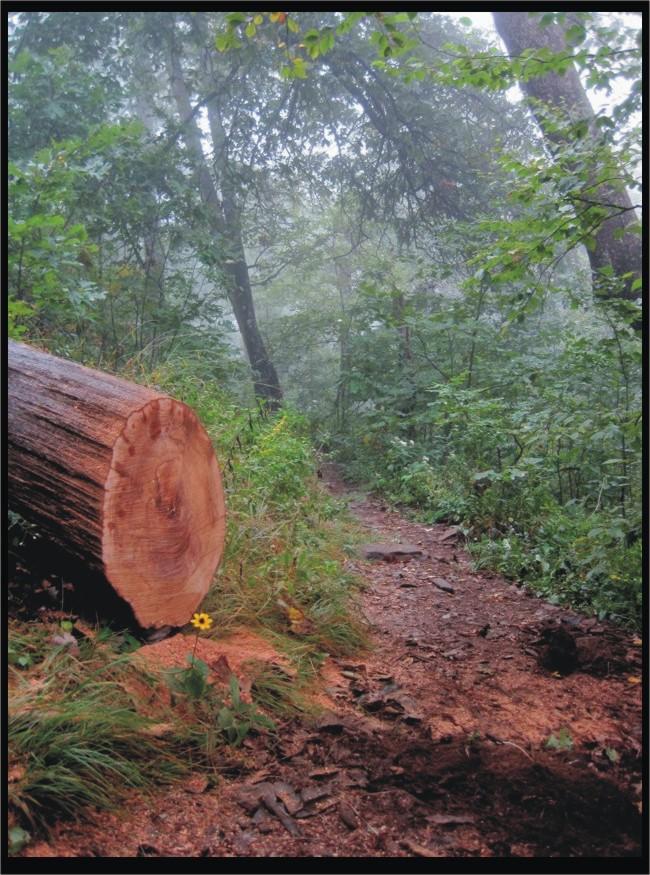 PAS/Blue Ridge Adventures - Pilot Rock Trail / FS 1206 Sept 22,2011-pr-wd-flower.jpg