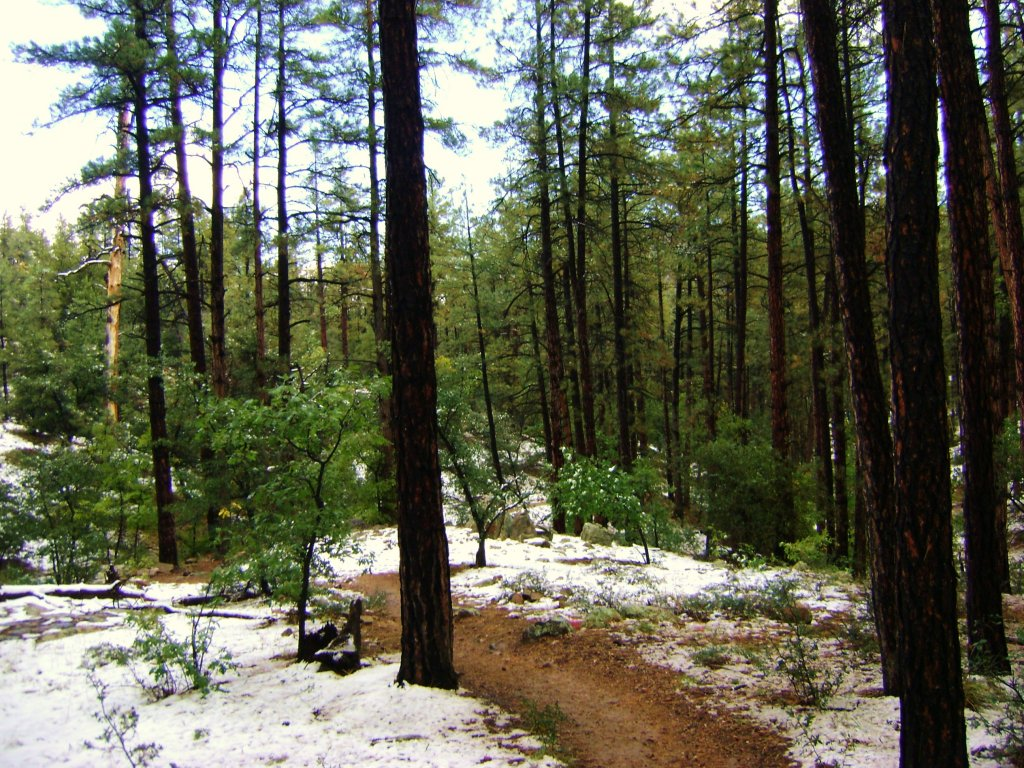 AZ Photo Friday - Oct. 11th - Coconino 250 Edition-prescott-oct-13-011.jpg