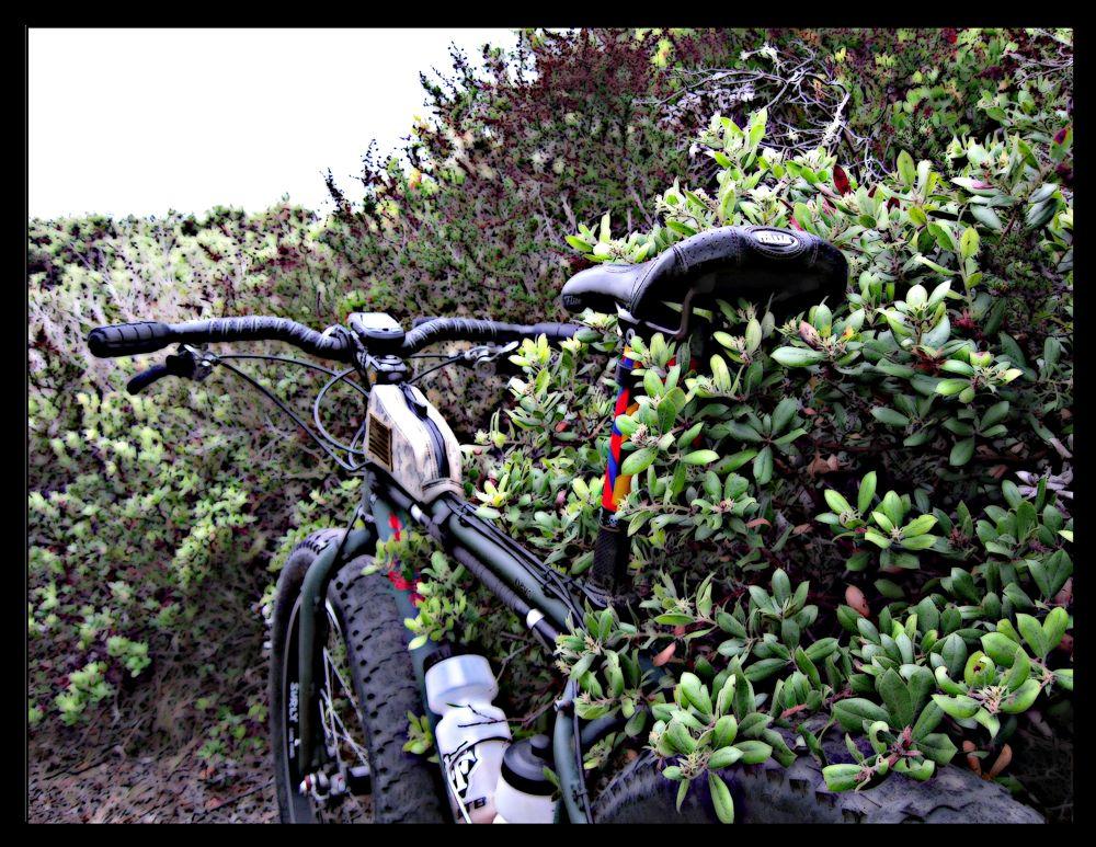 Daily fatbike pic thread-pug-sage.jpg