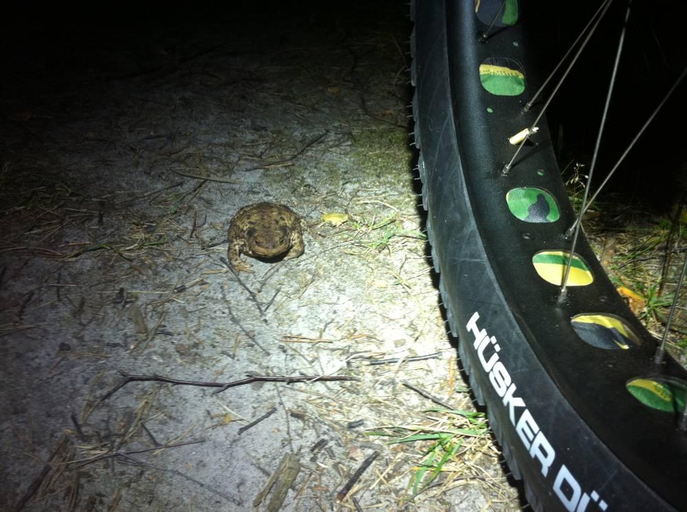 Daily Fat-Bike Pic Thread - 2012-pugfrog.jpg